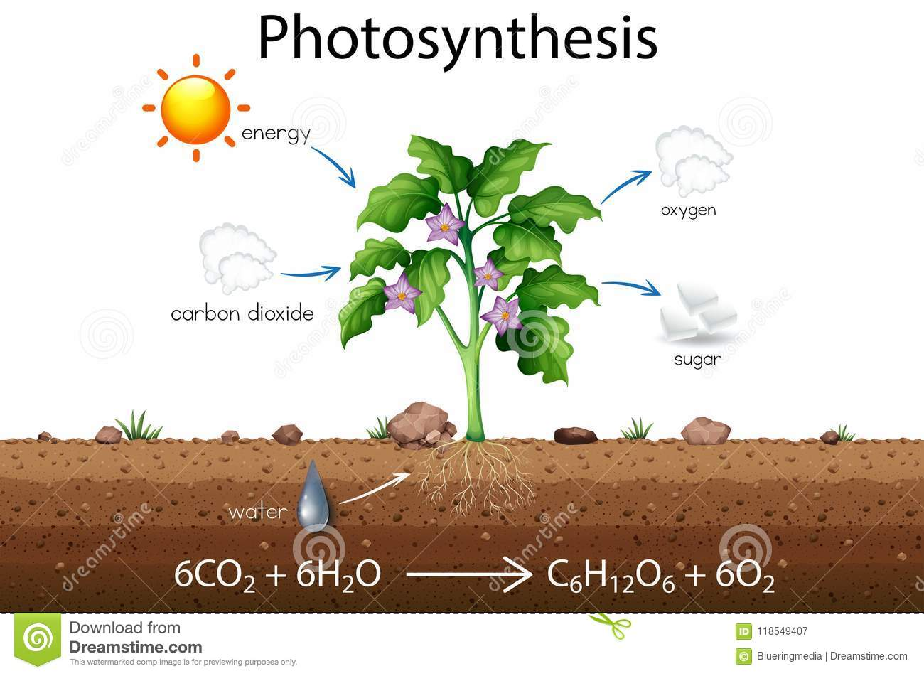 Photosynthesis explanation science diagram stock vector download photosynthesis explanation science diagram stock vector illustration of arrows ground 118549407 ccuart Gallery