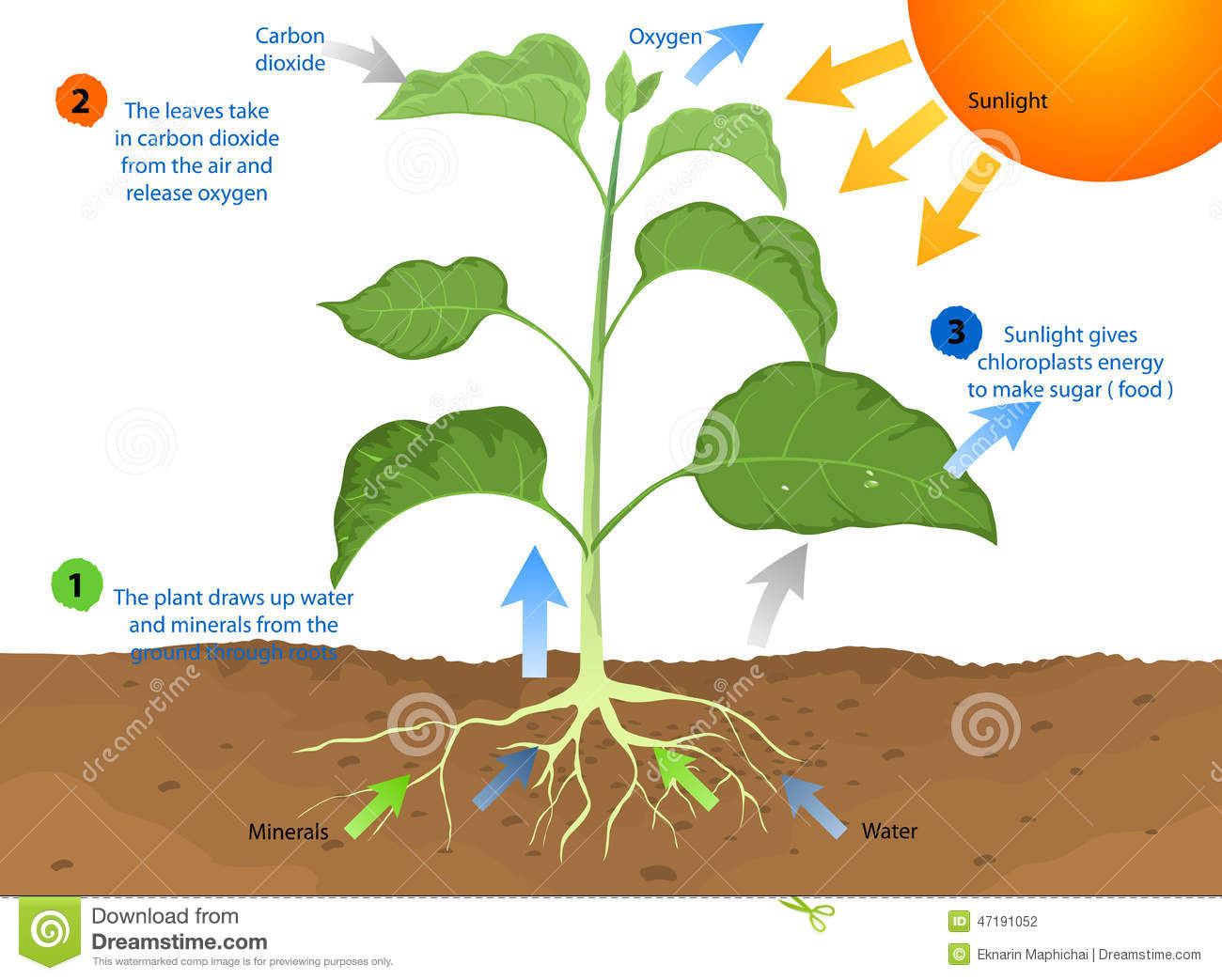 By photosynthesis which is the process