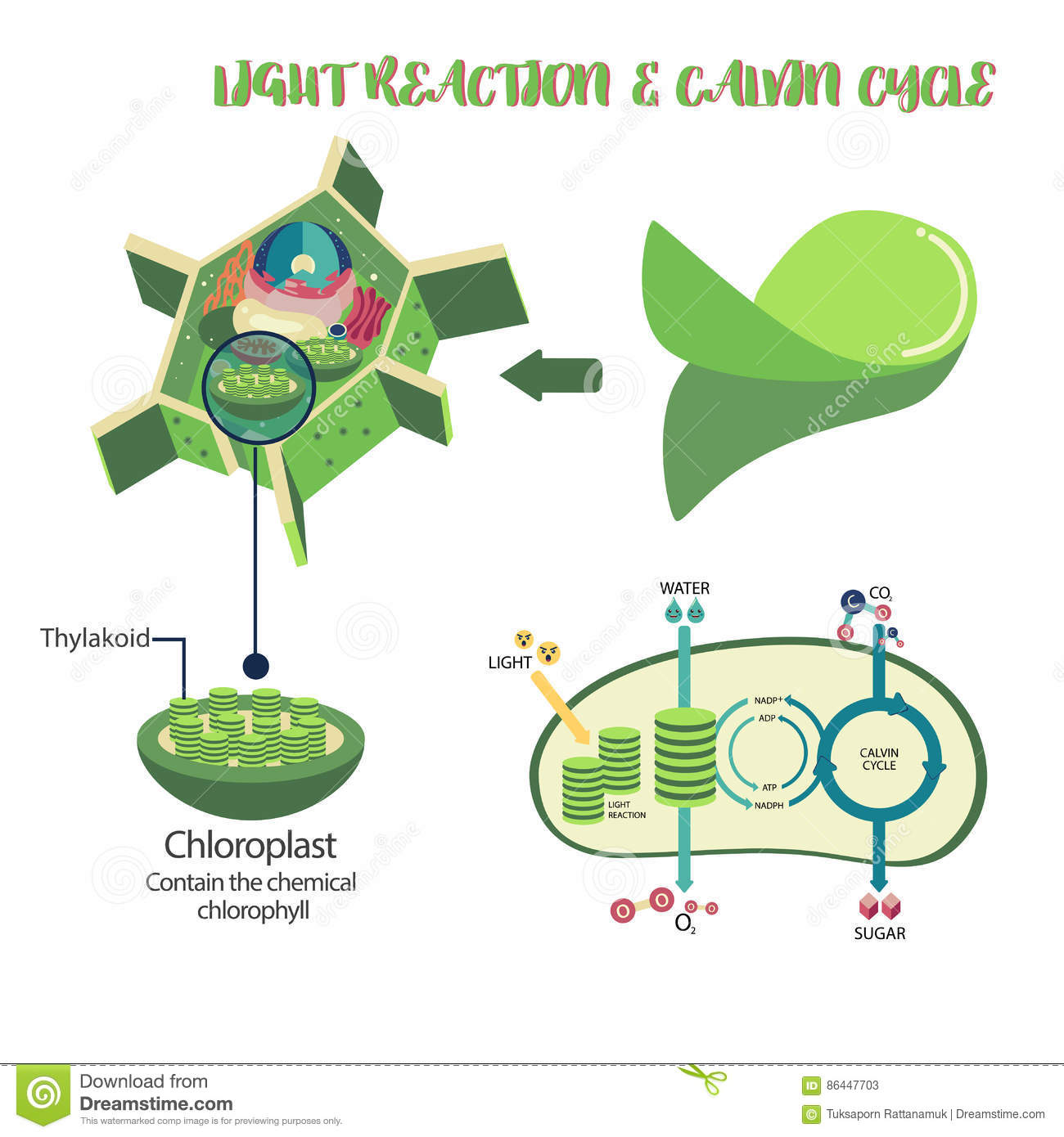 Photosynthesis process diagram stock vector illustration of download comp ccuart Images