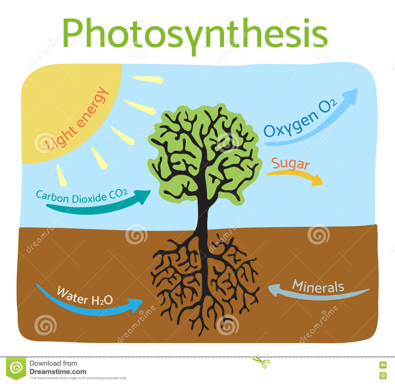 Photosynthesis process diagram schematic vector illustration stock download comp ccuart Choice Image