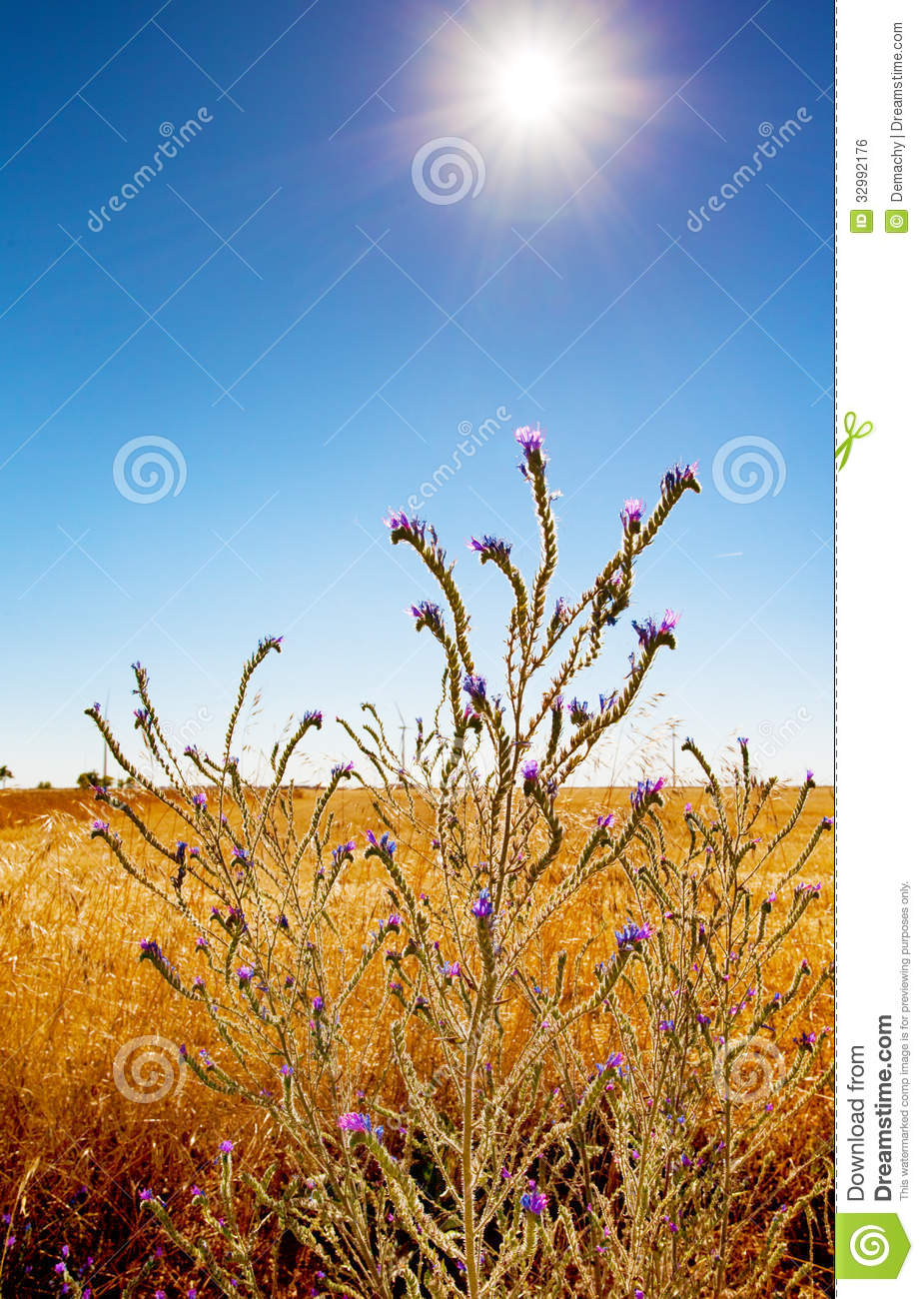 Wild plant looking fort sunlight to achieve photosynthesis.