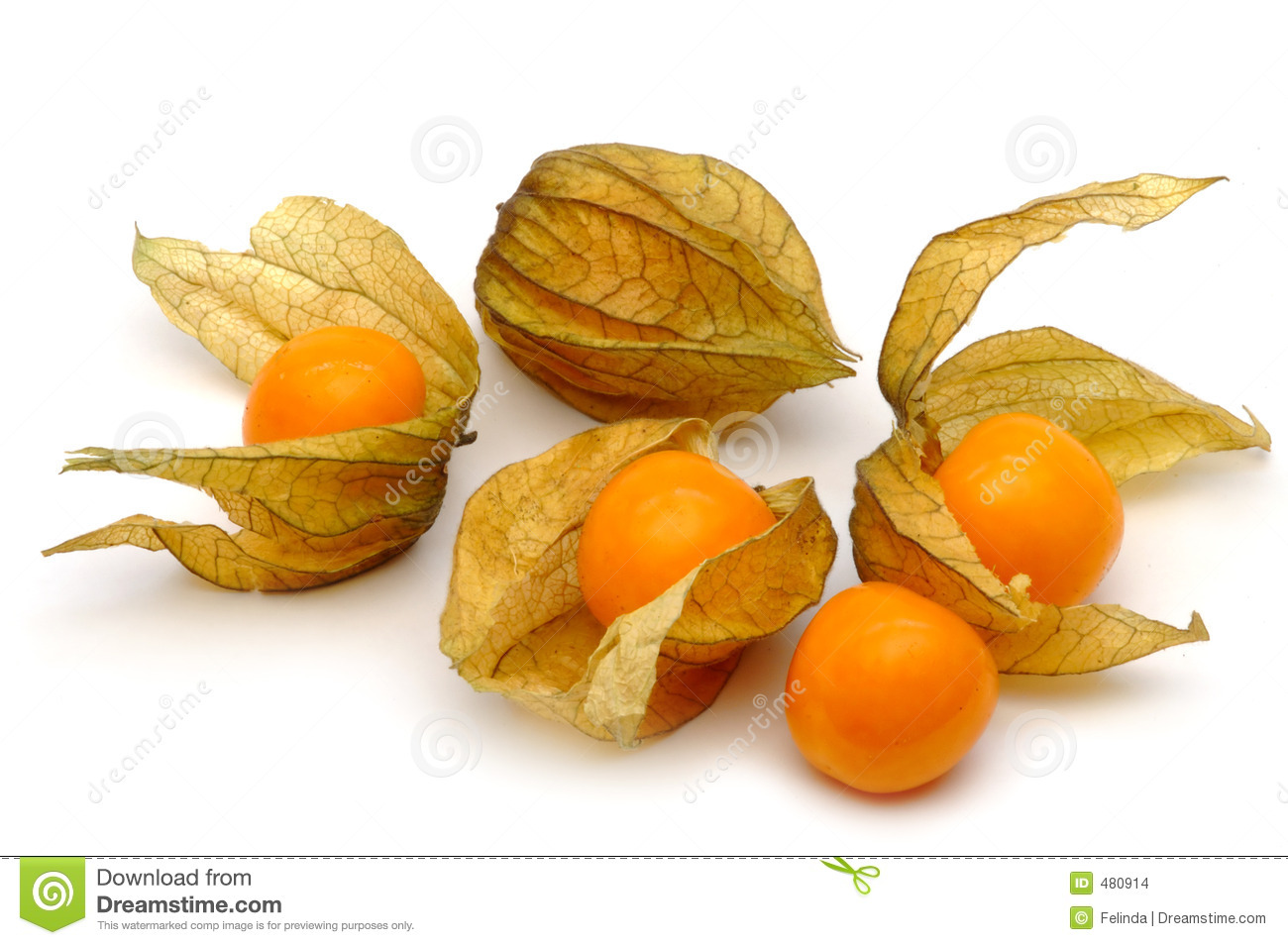 Physalis Stock Photo Image Of Orange Tropical Fruit