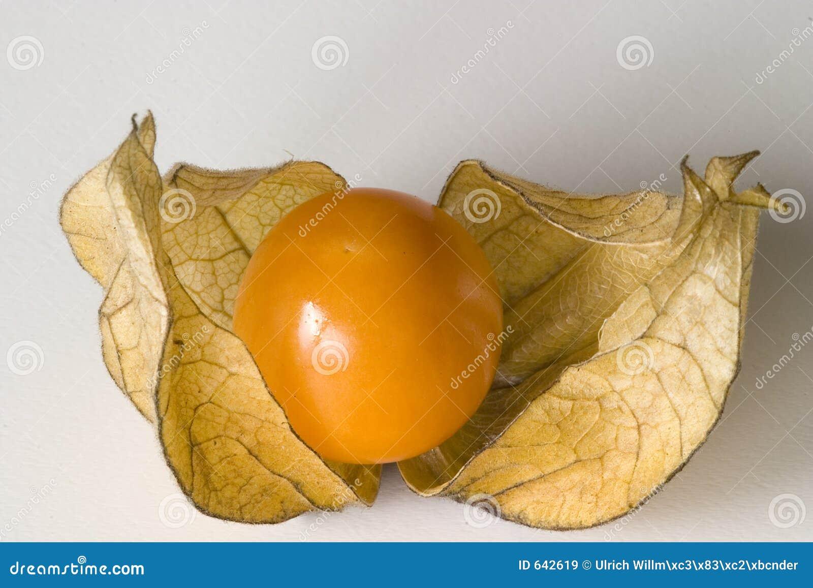 Download Physalis стоковое изображение. изображение насчитывающей ягод - 642619