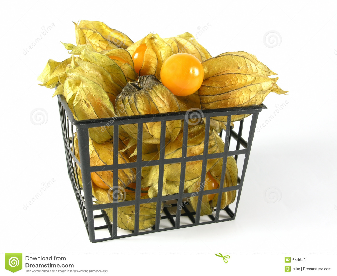 Download Physalis стоковое фото. изображение насчитывающей плодоовощи - 644642