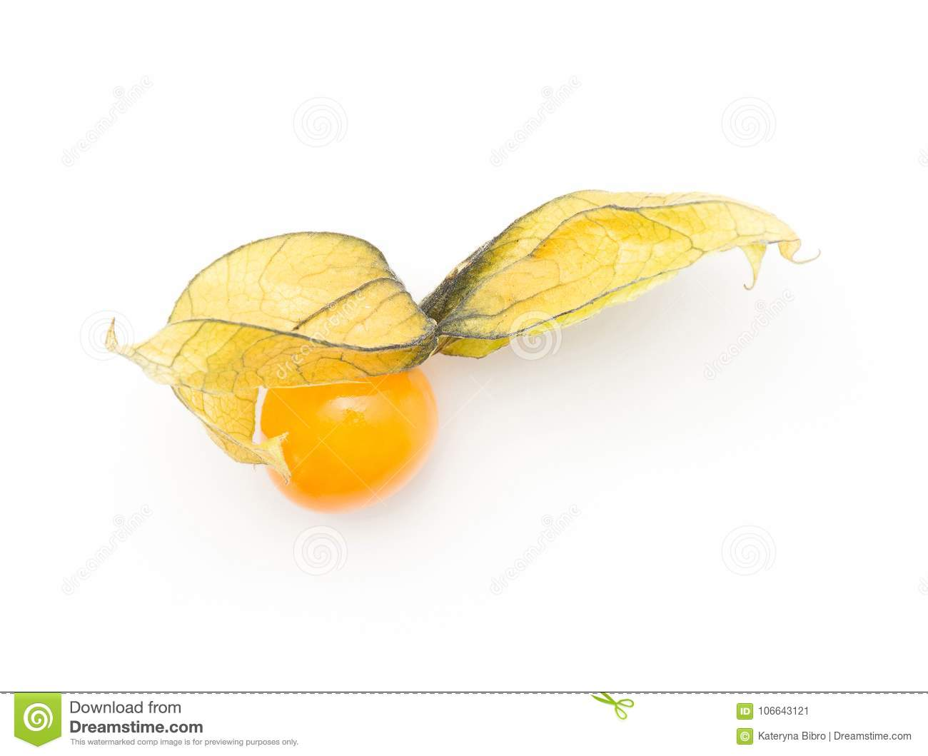 Physalis fresco