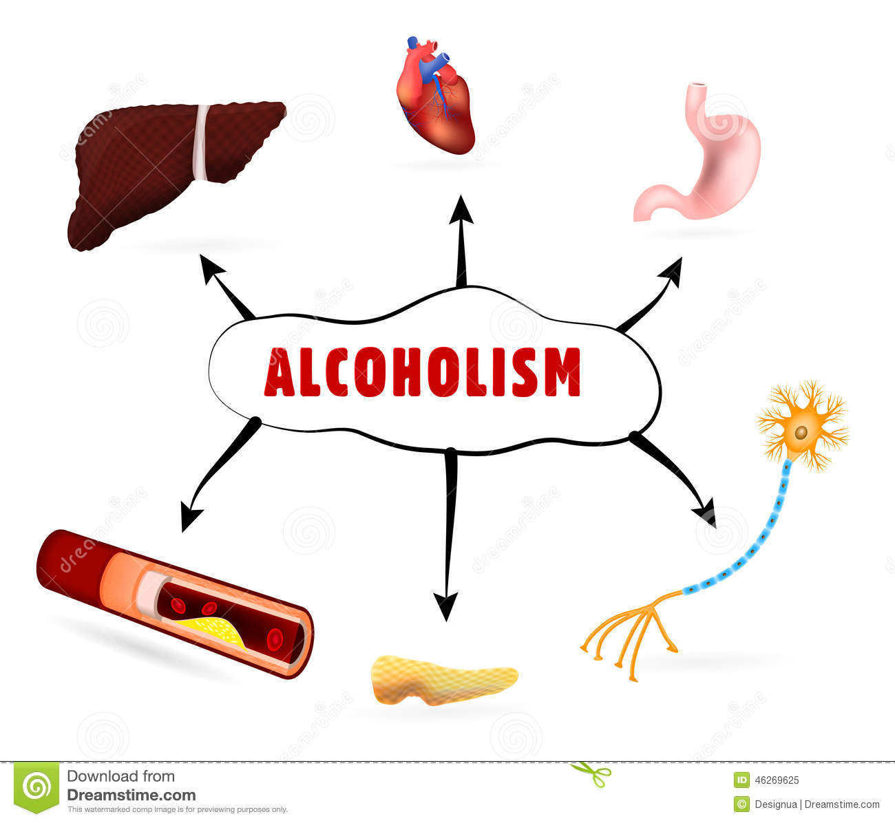 How alcohol affects the human body