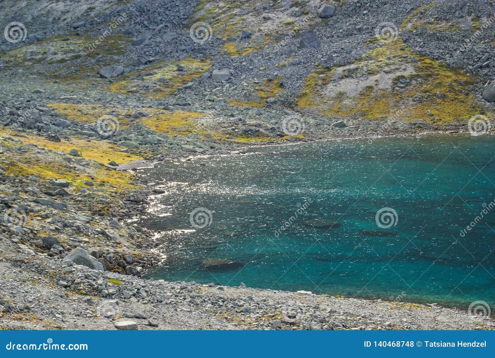 Piękna zimna północna natura: jaskrawy - zielony mech i strumienie