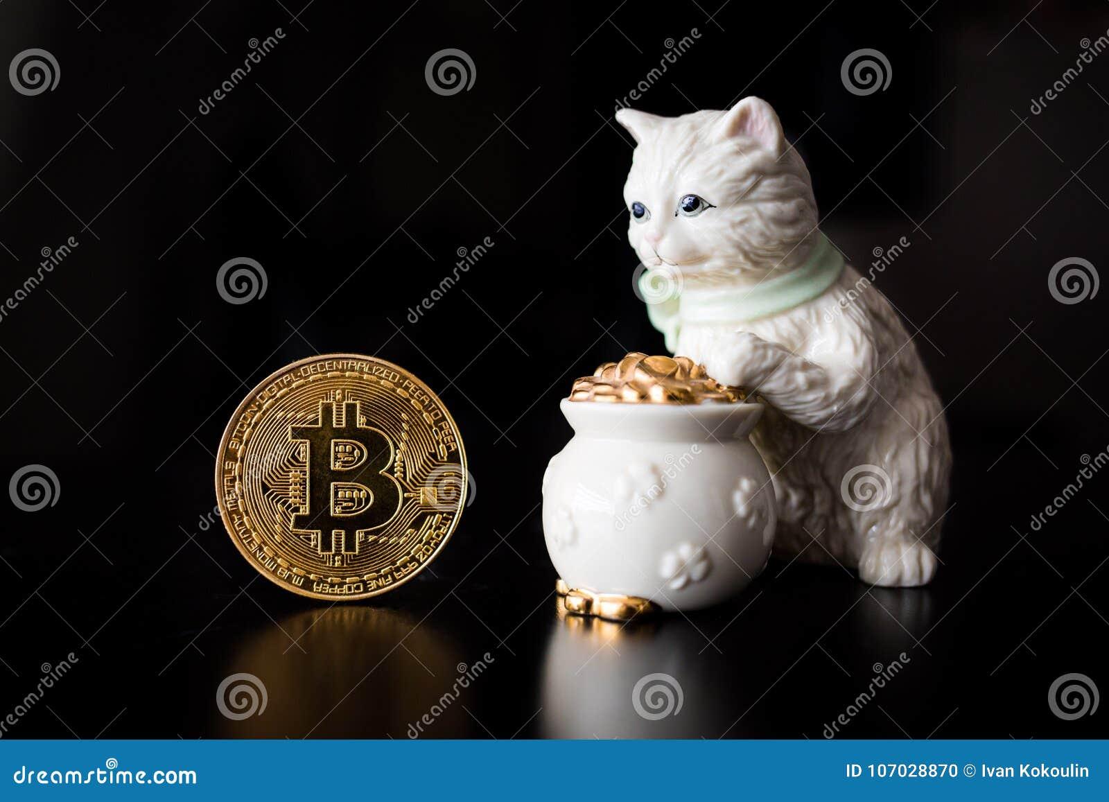 Pièce de monnaie simple de Bitcoin avec un chat