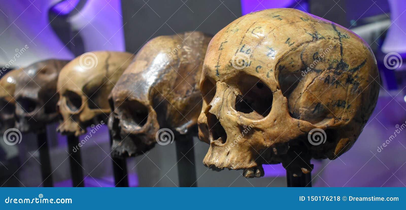 """Pièce romaine de crânes de l exposition de """"gloire et de Gore """", musée de Londres"""