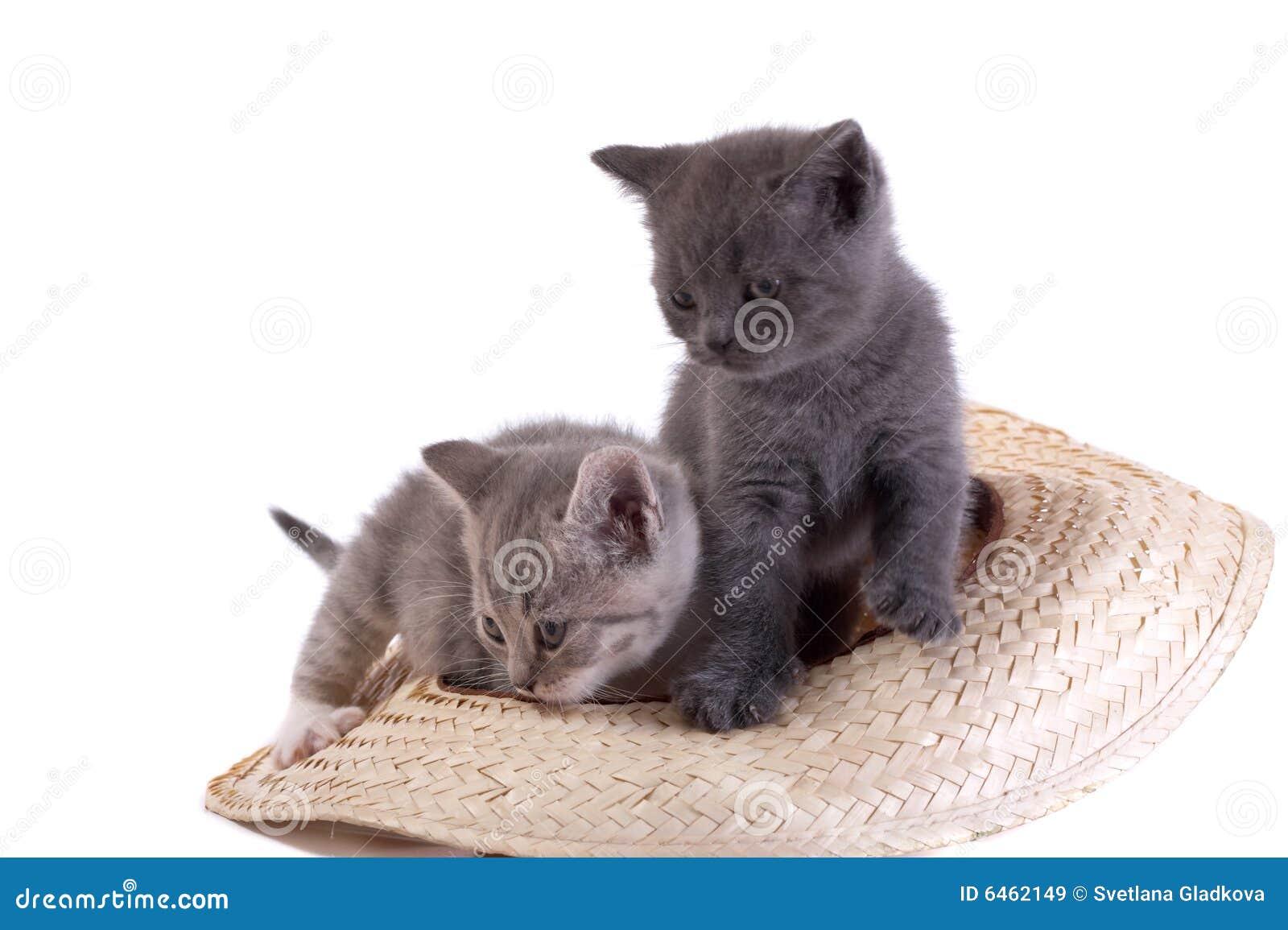 Pièces de chaton sur un fond blanc