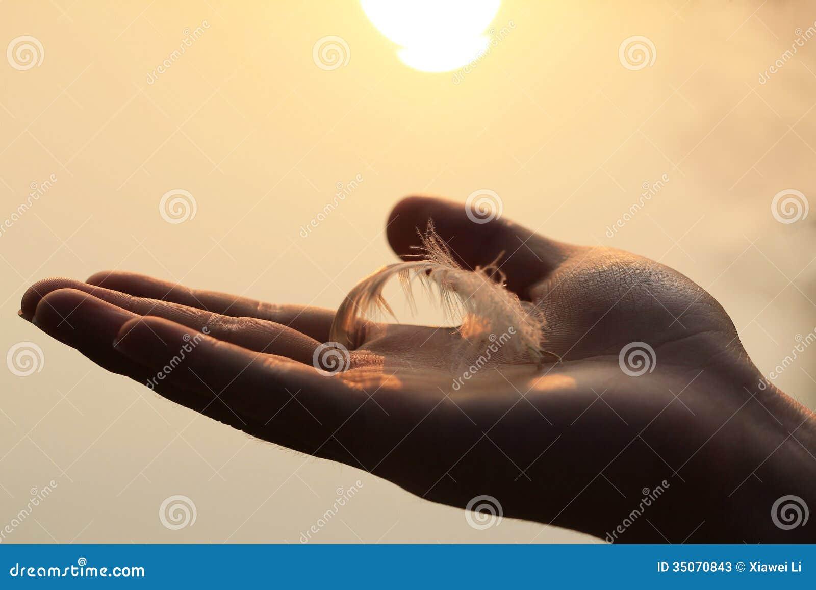 Piórko łabędź na ręce gdy zmierzchy