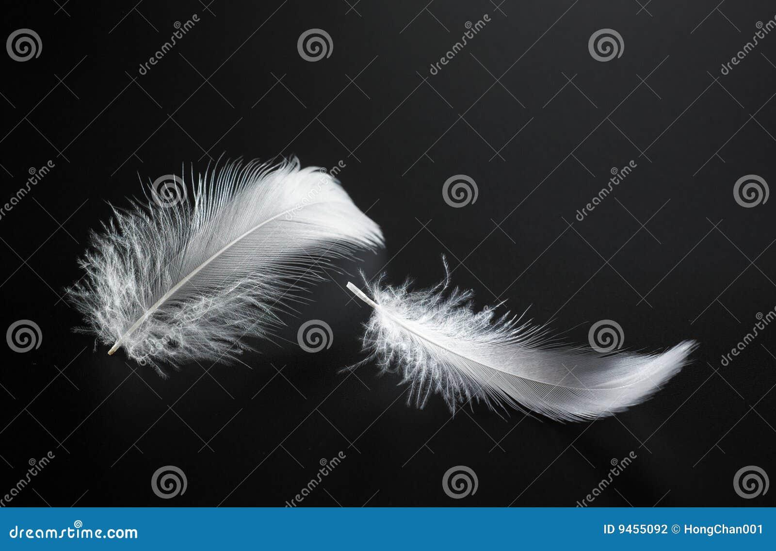 Piórkowy biel