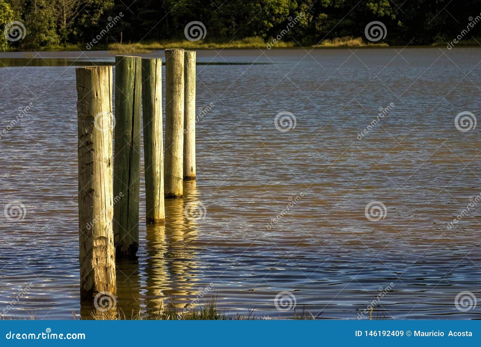 Pięć drewnianych poczt w jeziorze