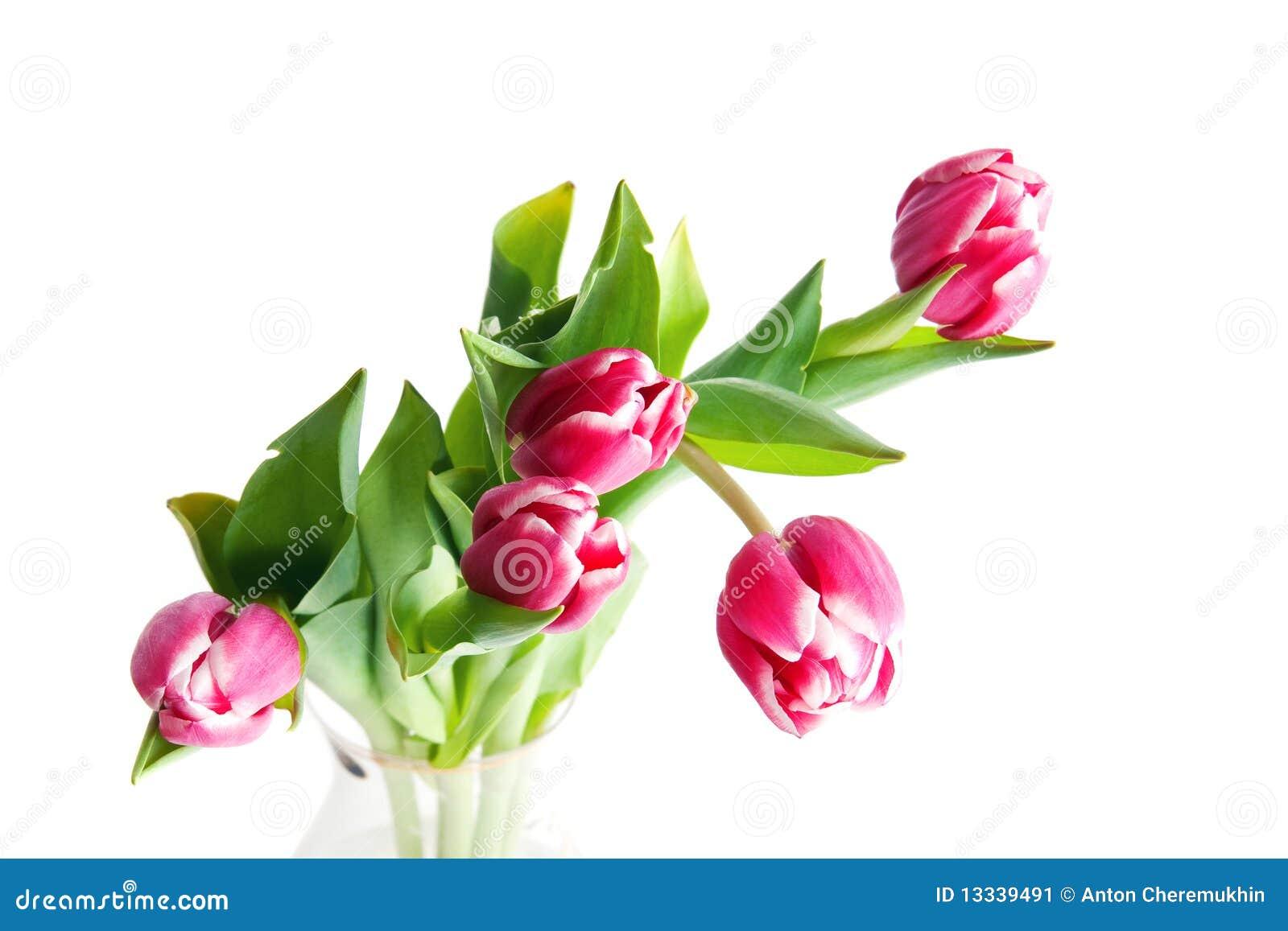 Pięć tulipanów