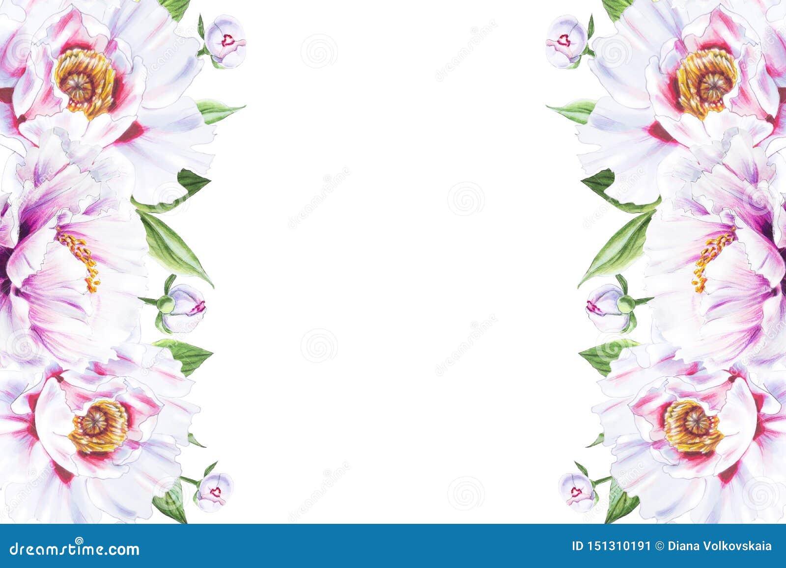 Piękna biała peoni granicy rama Bukiet kwiaty Kwiecisty druk Markiera rysunek