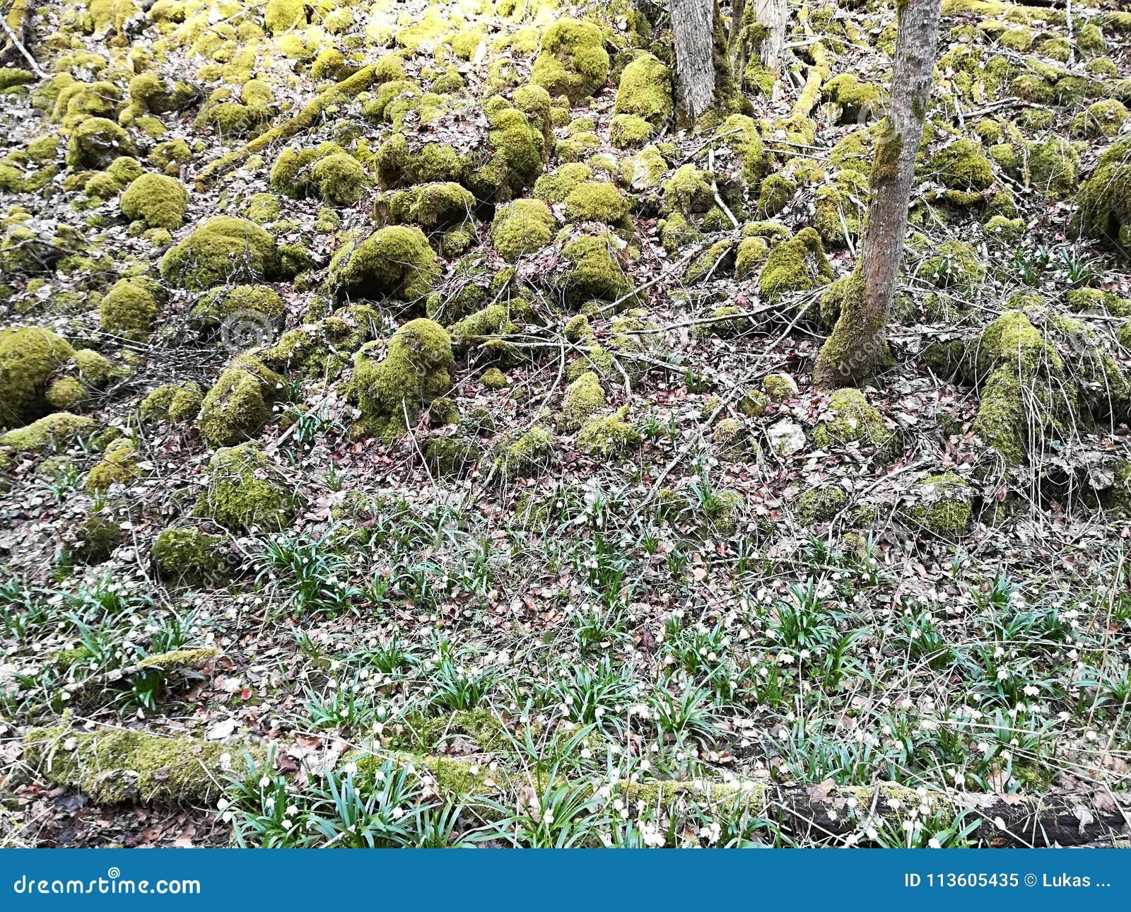 Piękna i ładna wiosna kwitnie w naturze