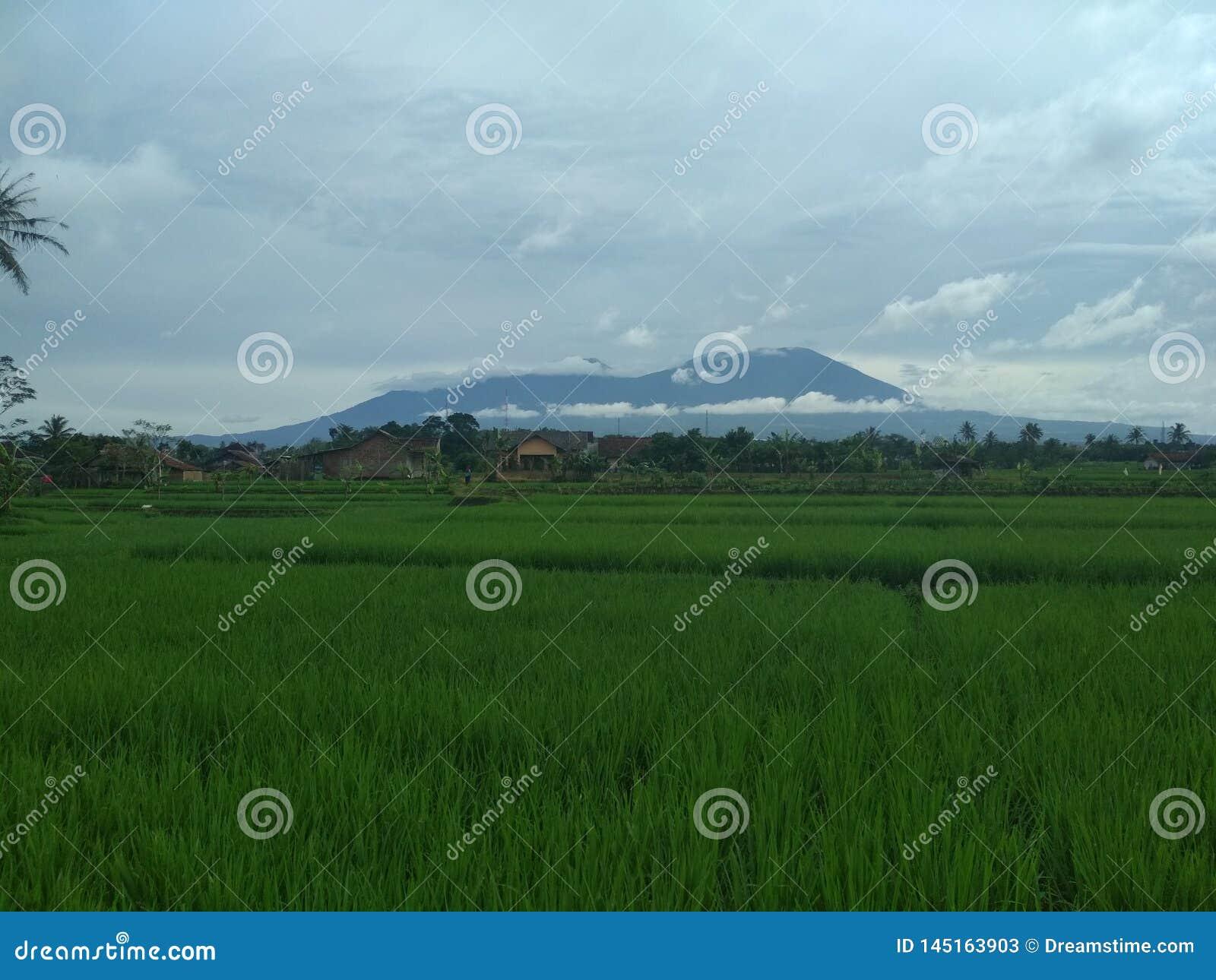 Piękna i chłodno Indonezyjska natura