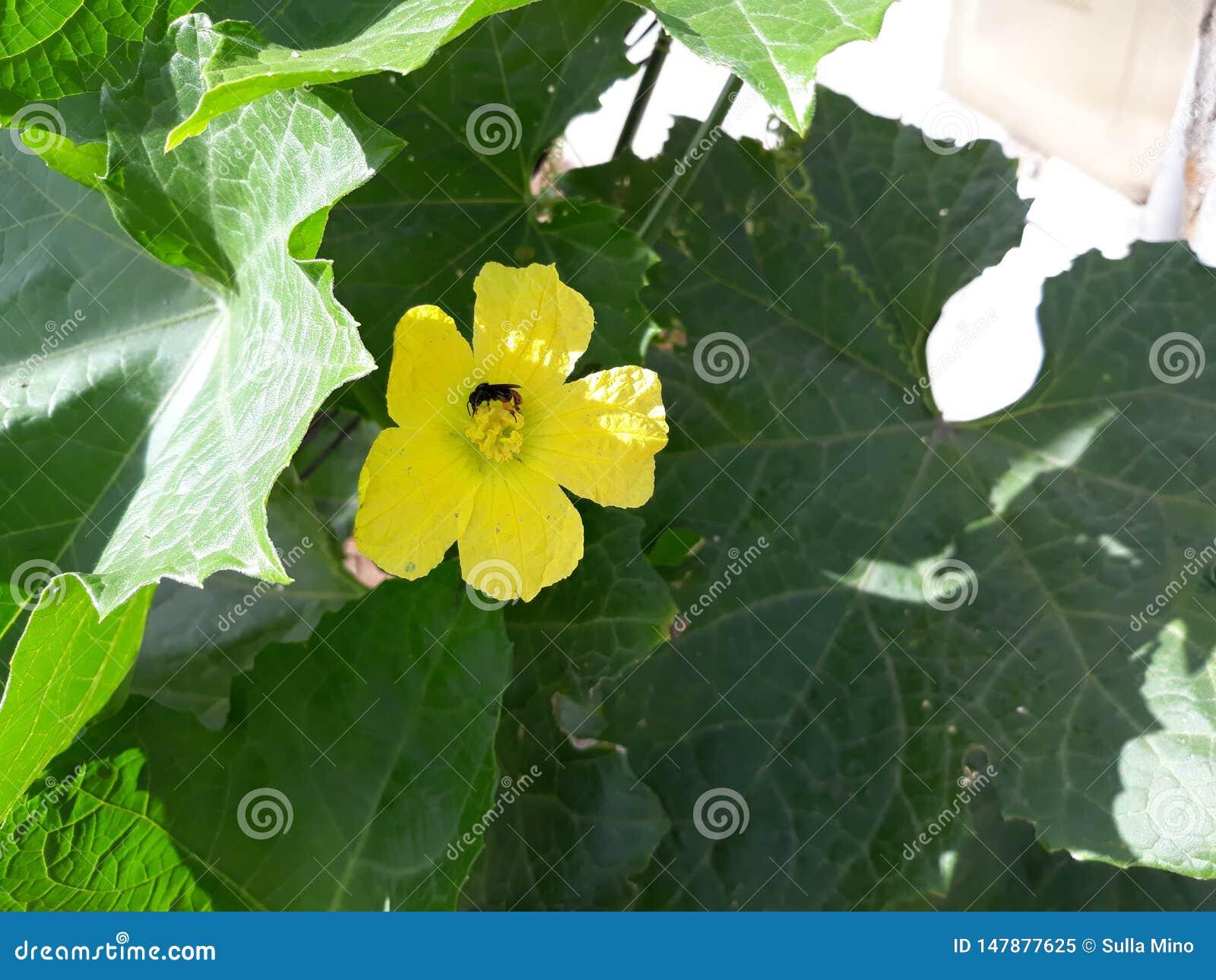 Piękna i mała ściga kwiatu i bani