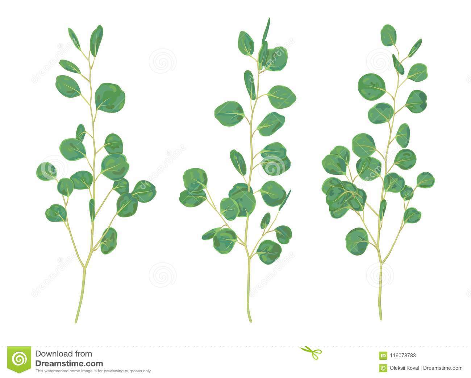 Piękna ilustracja gałąź i liście eukaliptusowy silv