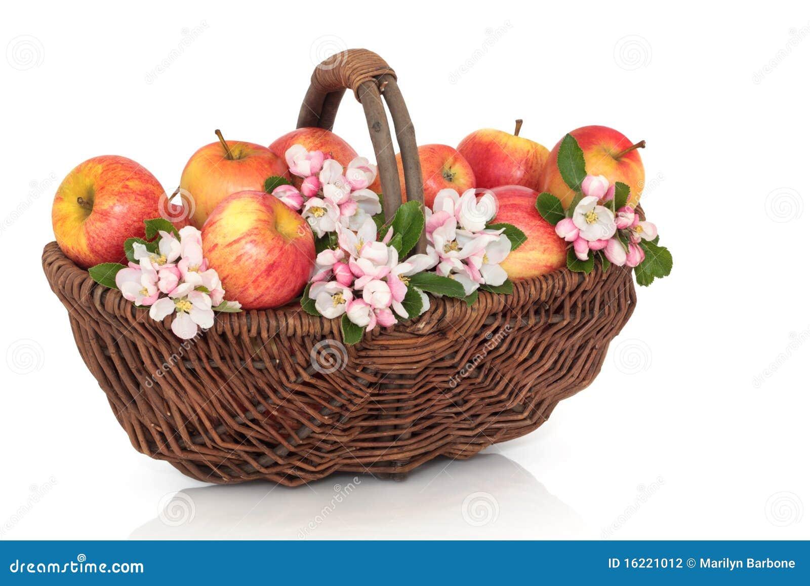 Piękna jabłczany okwitnięcie