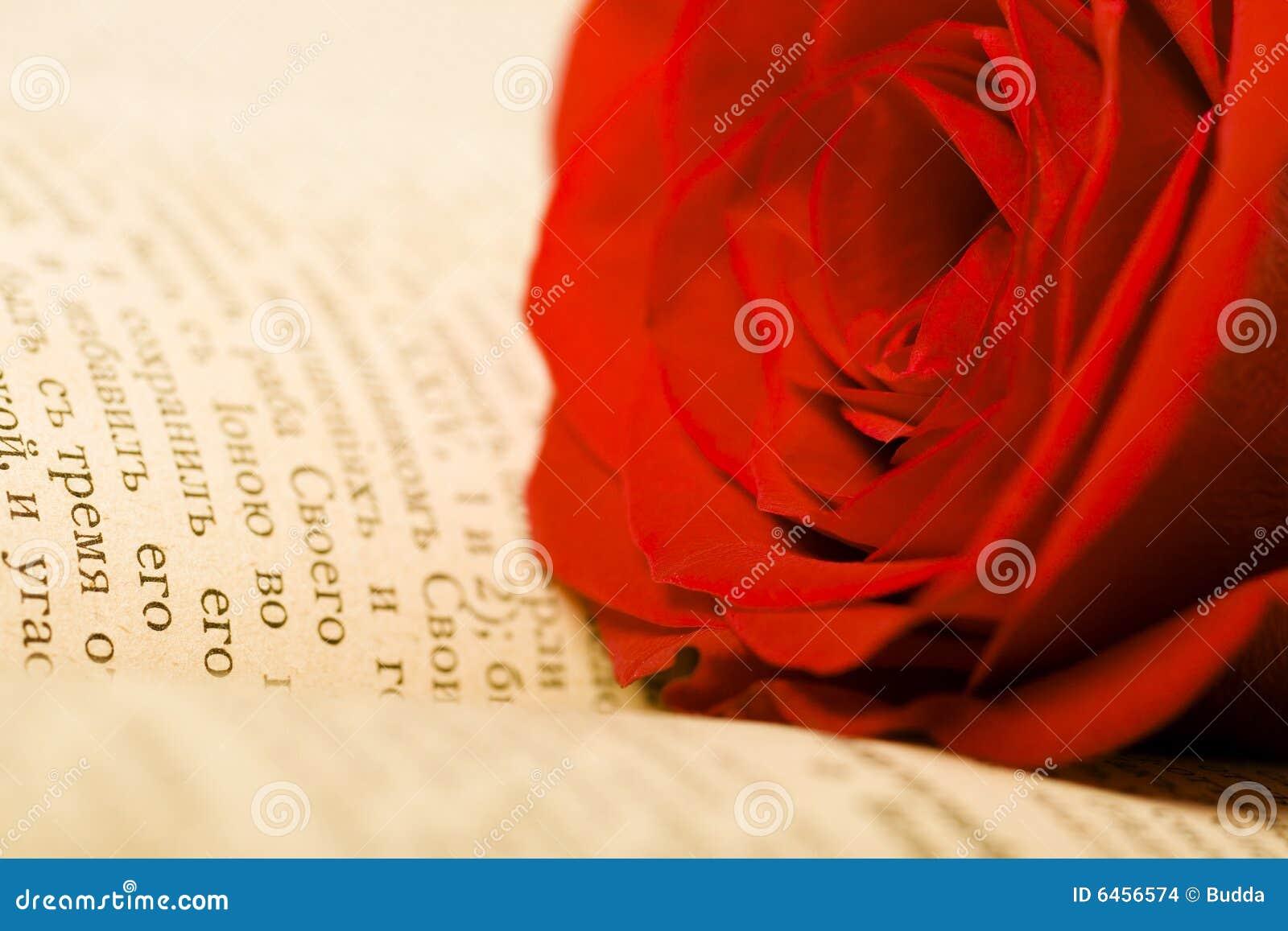 Piękna książka rose