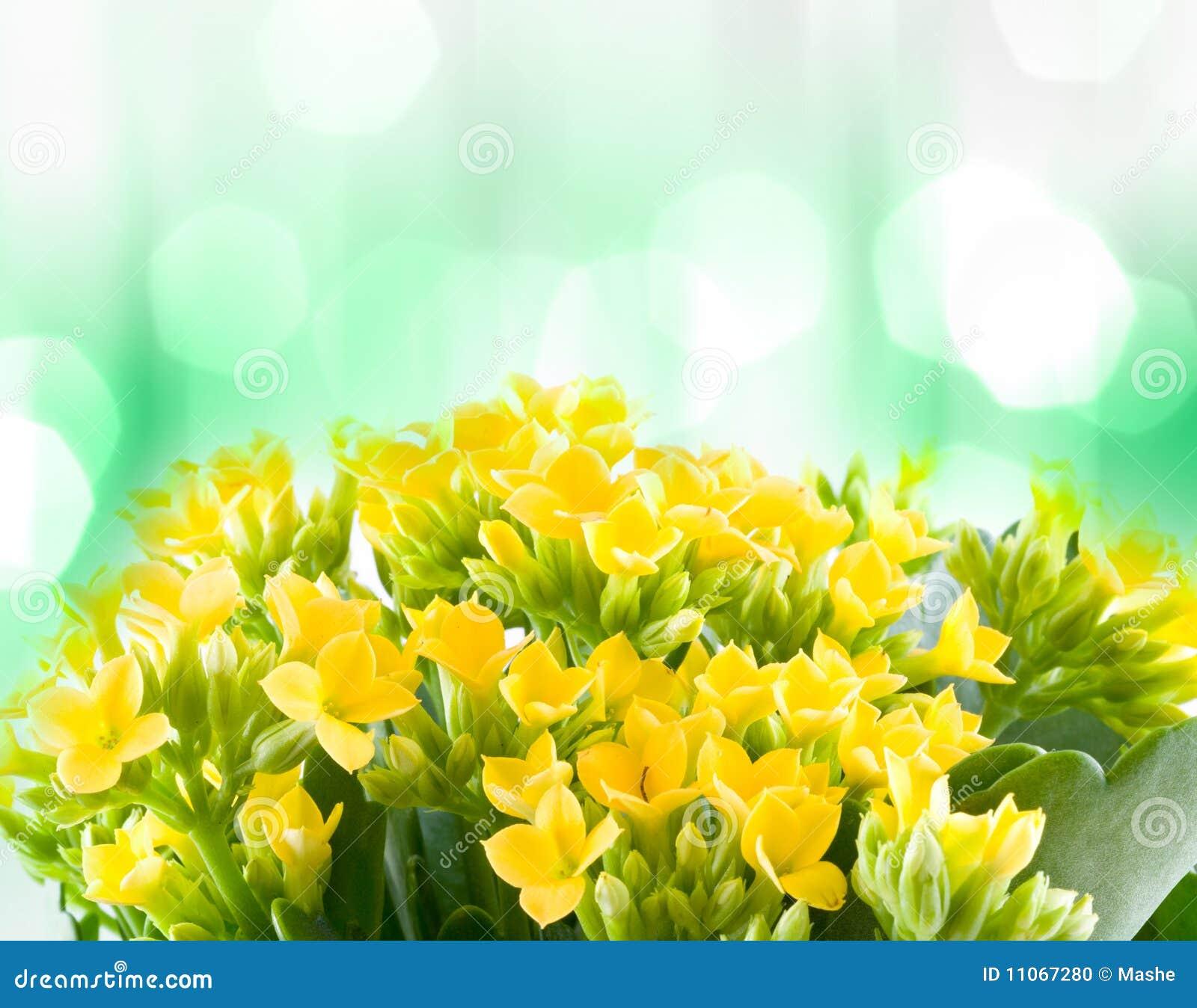 Piękna kwiatów macro wiosna