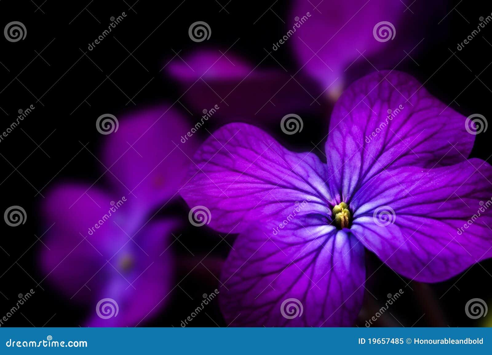 Piękna kwiatu rzetelności wizerunku klucza depresja
