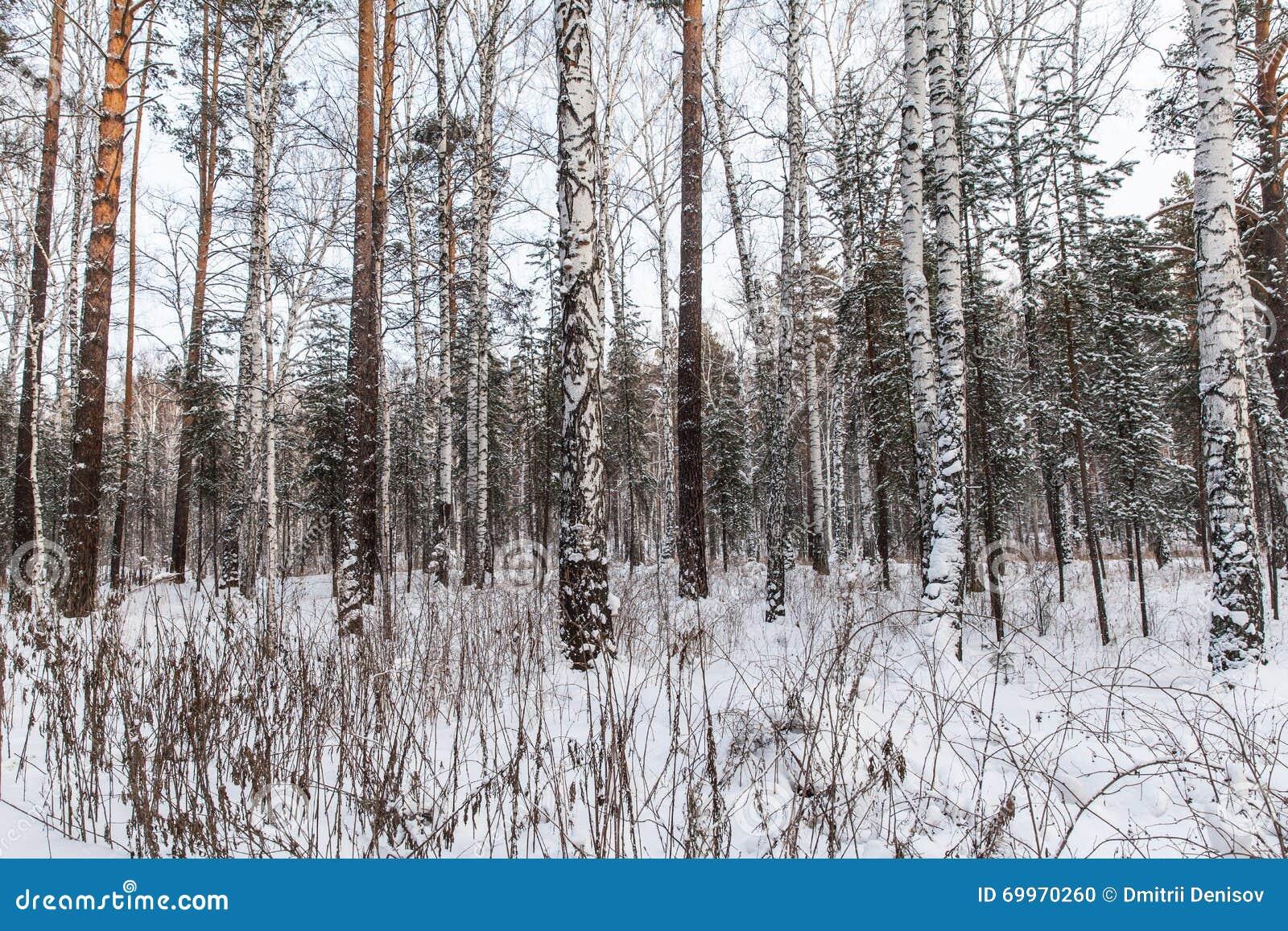 Piękna lasowa zima