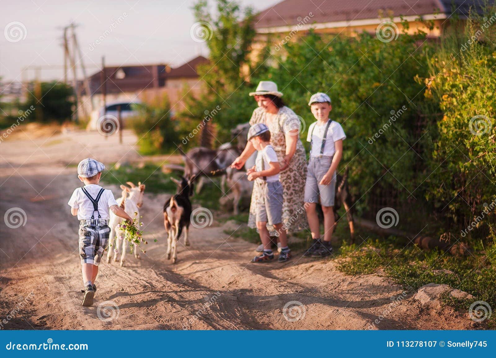 Piękna lato fotografia rodzinna ` s rozrywka Babcia i wnuki pasamy kózki przy zmierzchem Niemowlęta są chłopiec wewnątrz zwierają