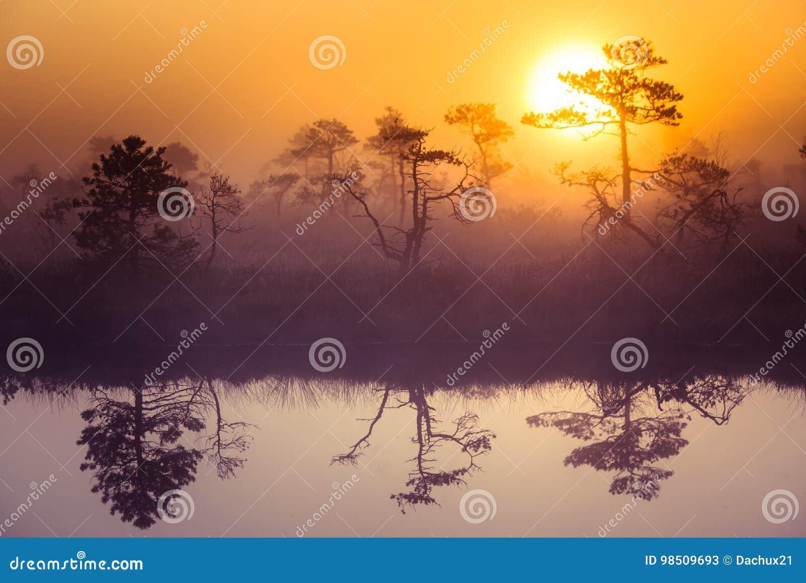 Piękna, marzycielska ranek sceneria słońca wydźwignięcie nad mglisty bagno, Kolorowy, artystyczny spojrzenie,