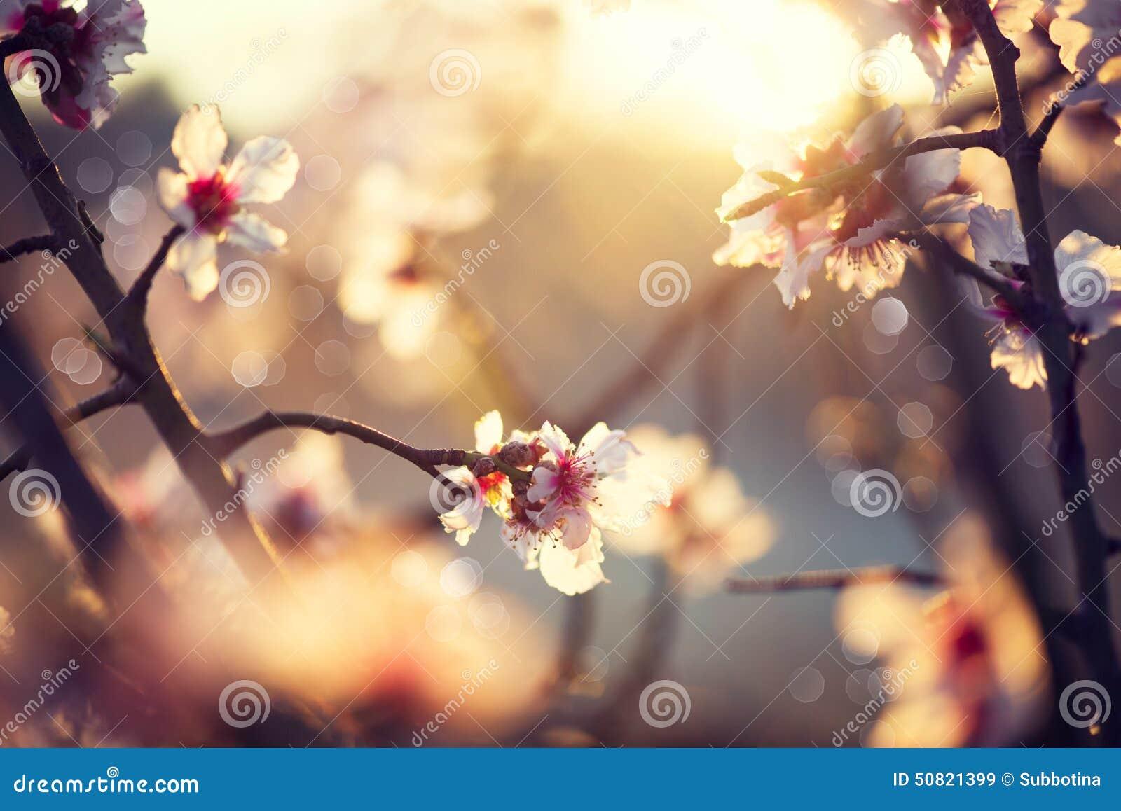 Piękna natury scena z kwitnącym drzewem