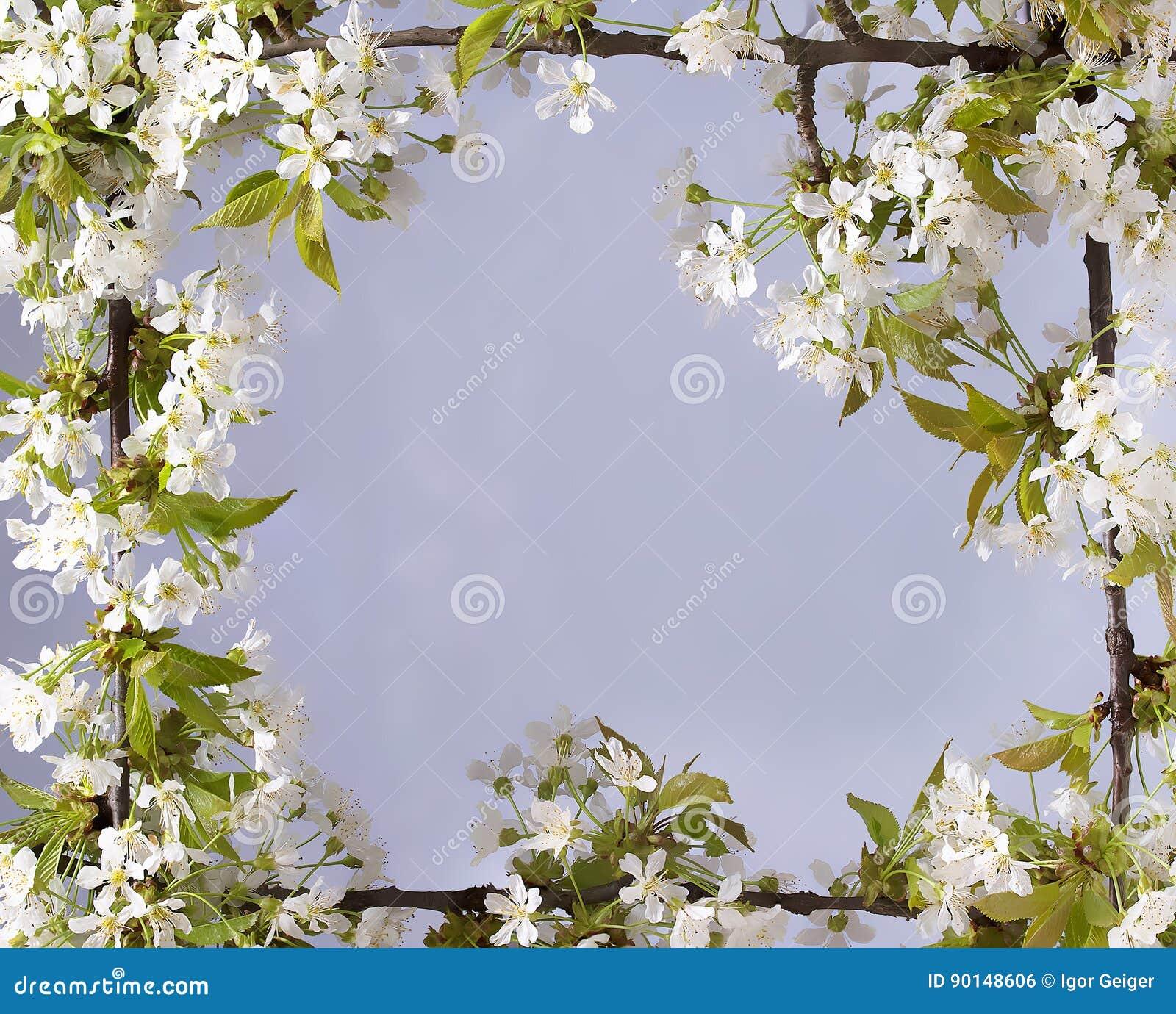 Piękna rama z kwiatami wiśnia wiosny lato