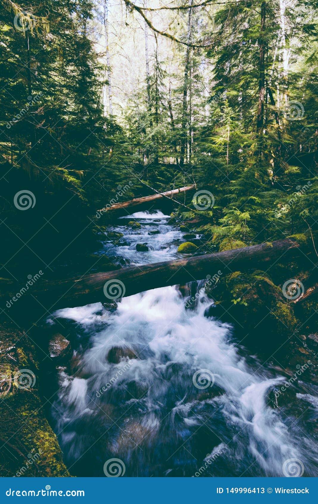 Piękna rzeka z silnym prądem w drewnach
