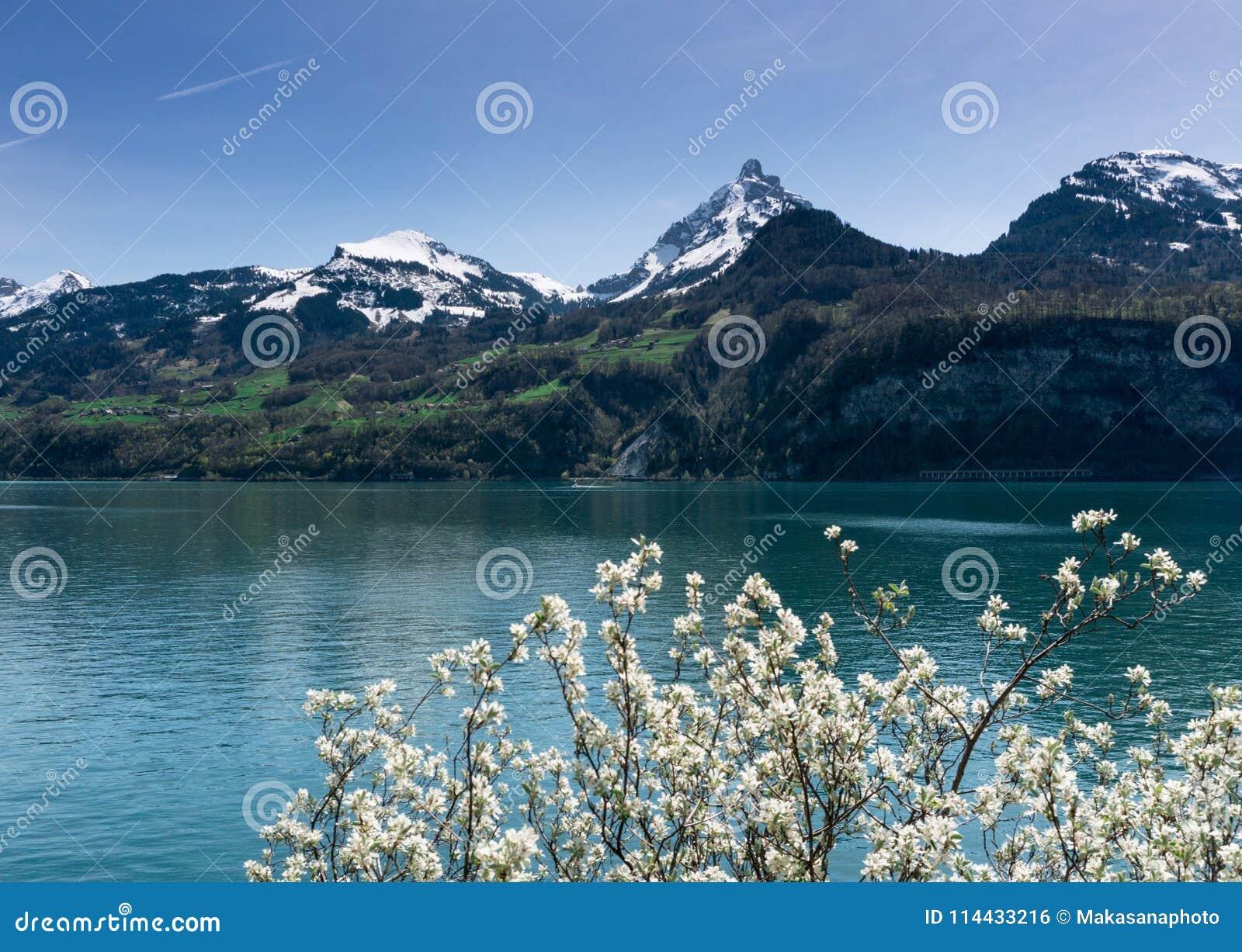 Piękna turkusowa halna jeziorna panorama z śnieżystymi szczytami, zielonymi łąki, lasy i kwitnący drzewa w foregro