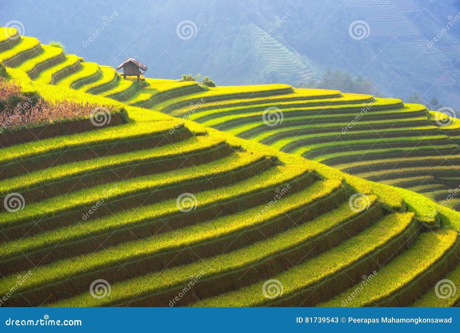 Piękna warstwa góra i natura w ryżu tarasie Wietnam krajobraz