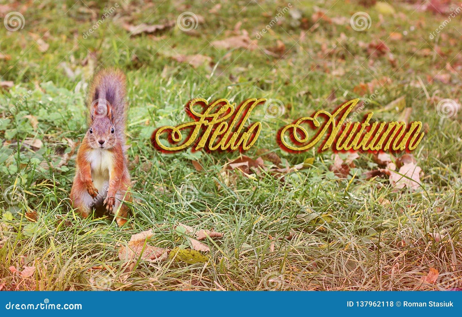 Piękna wiewiórka w żółtych liściach ruda wiewiórka Piękna jesień Cześć zima Wiosna