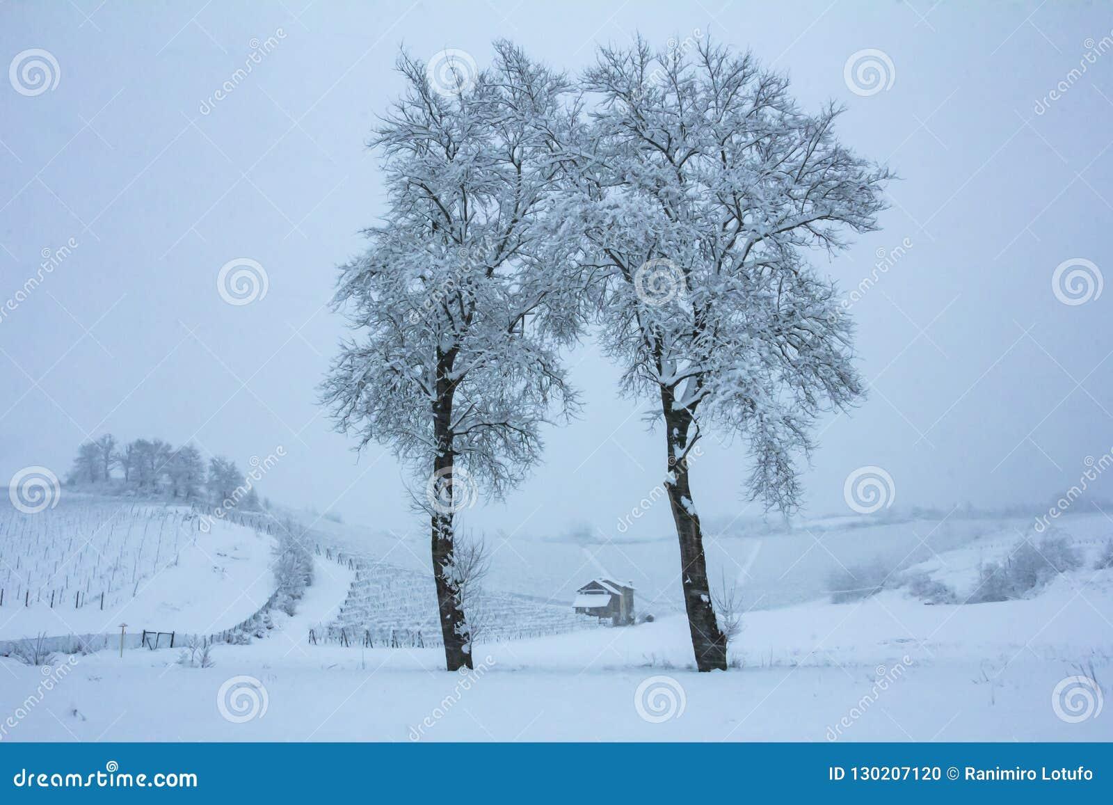 Piękna zimy natura z udziałami śnieg Drzewo z udziałami śnieg i zimno Śnieżna zima ja