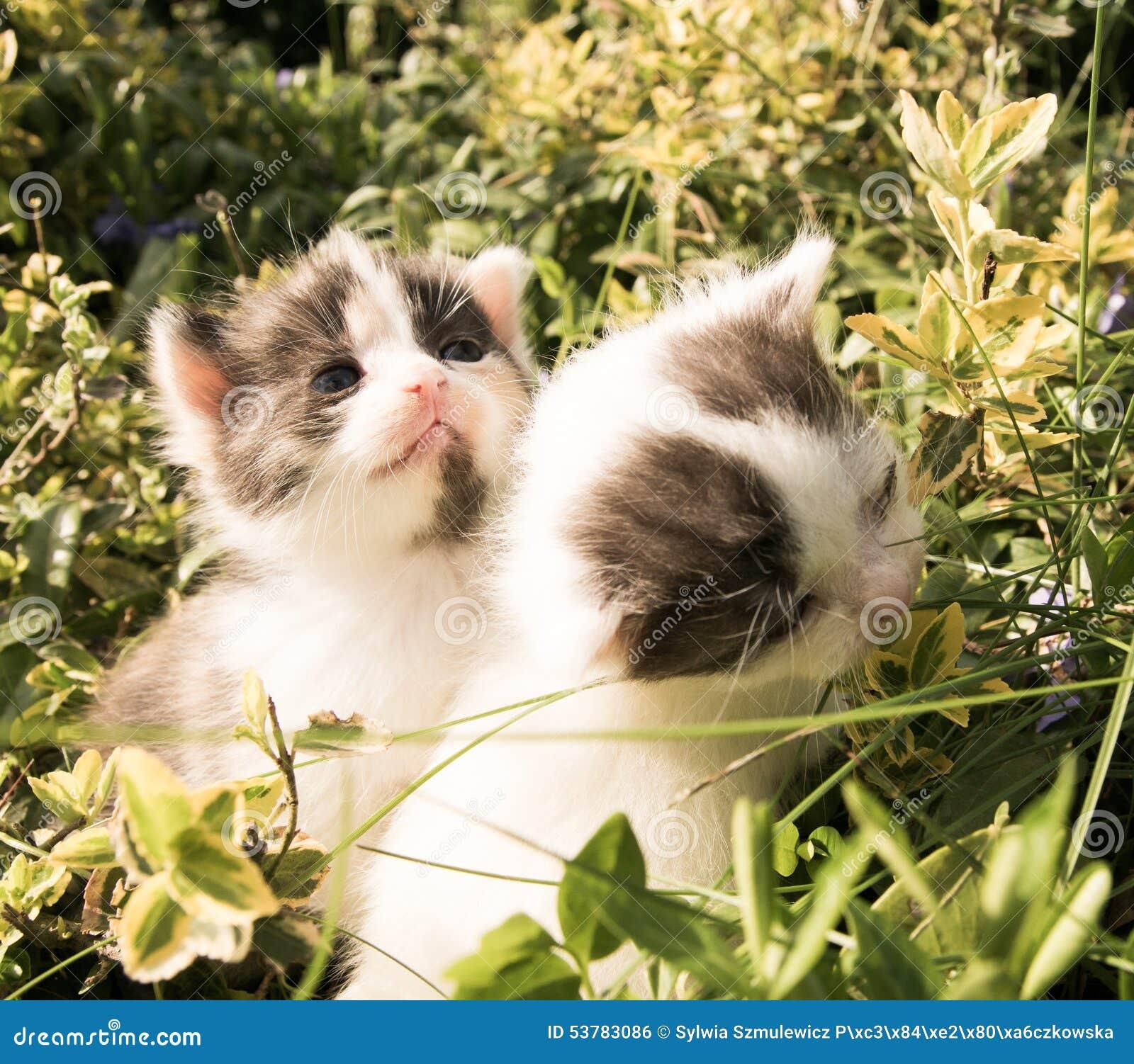 Piękne kociaki