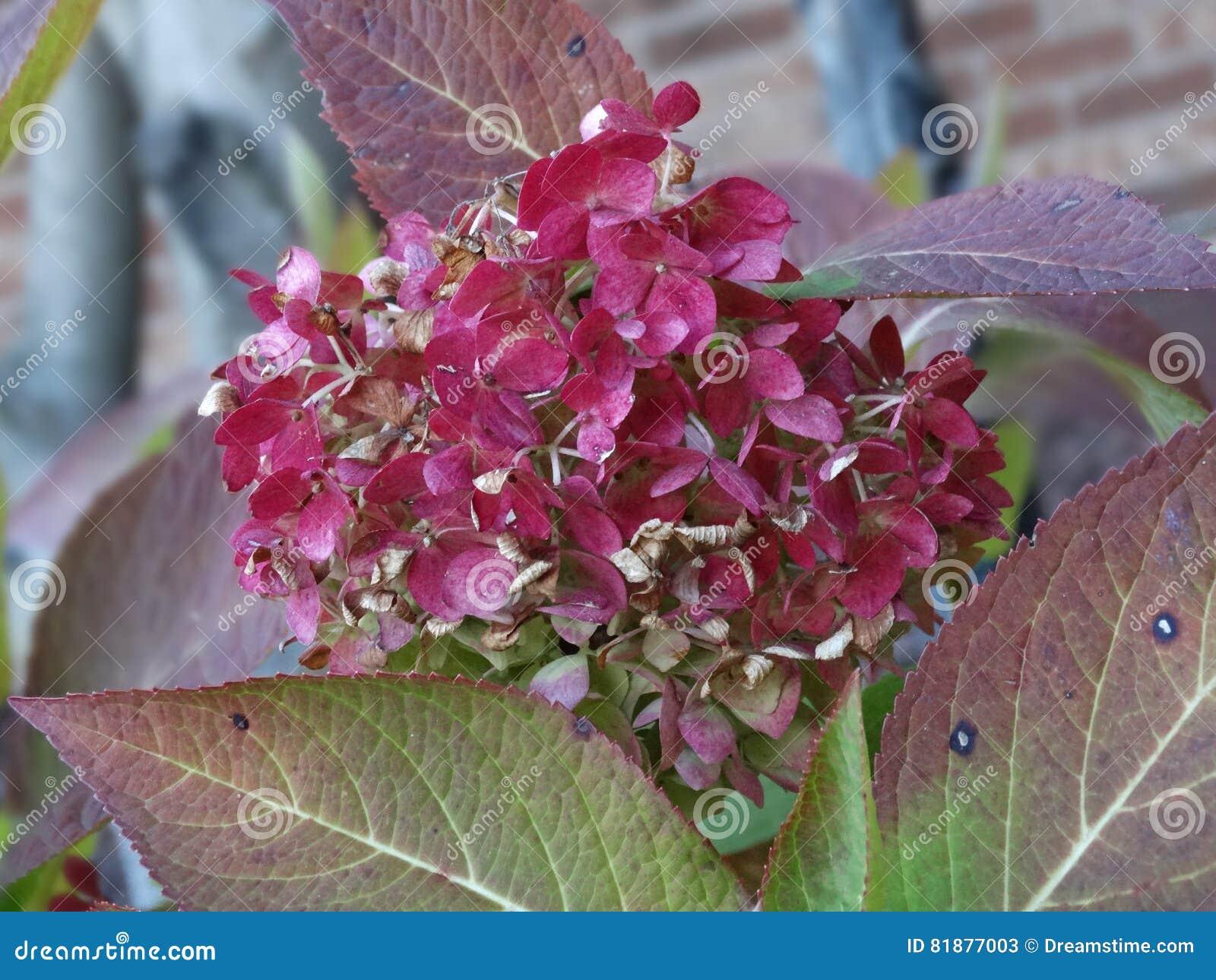 Piękne kwiat purpurowy