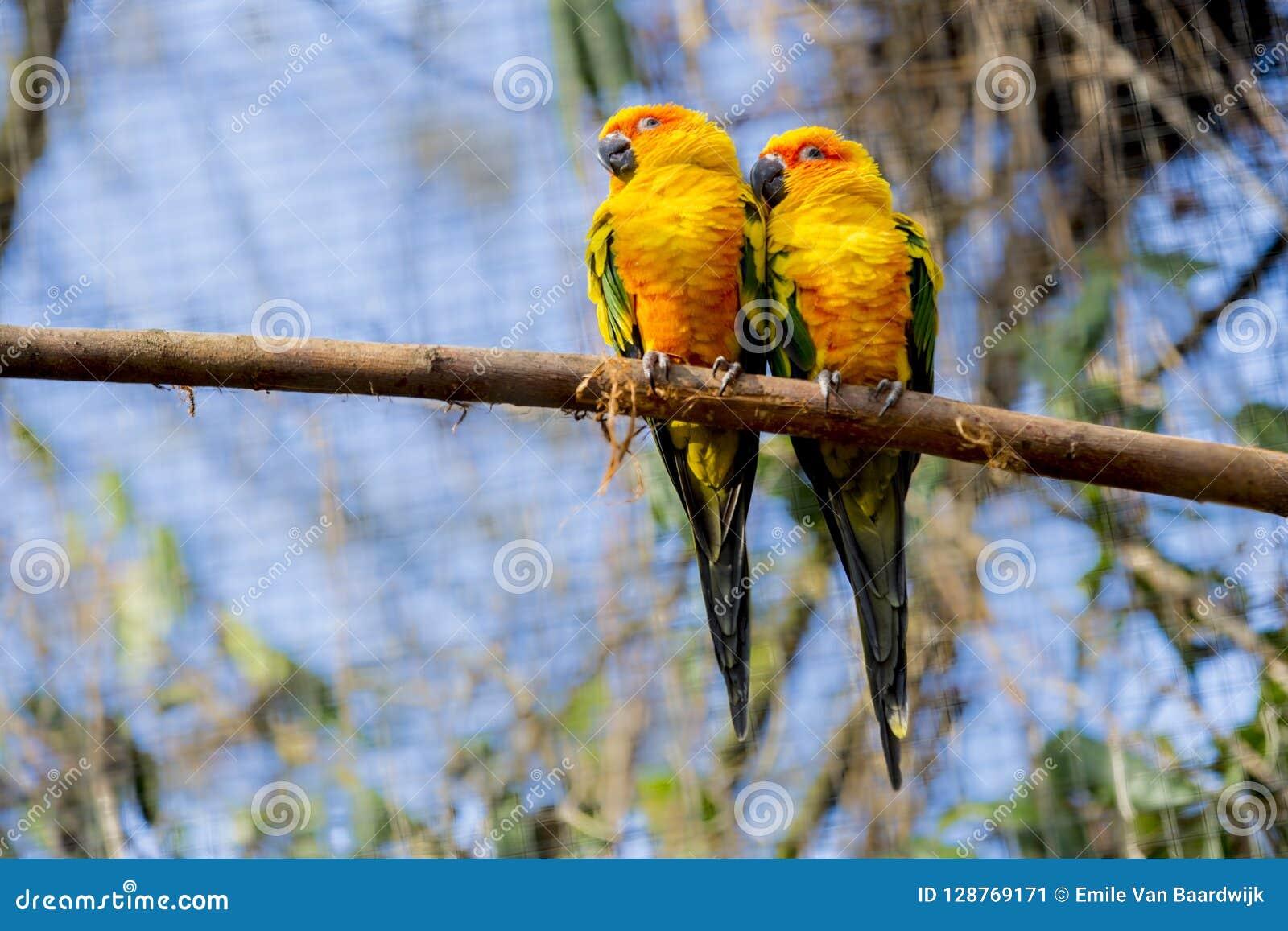 Piękne papugi na drewnianym bagażniku z zielonym roślinności tłem