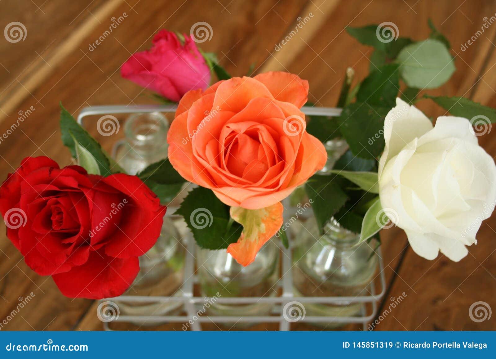 Piękne róże przy stołem