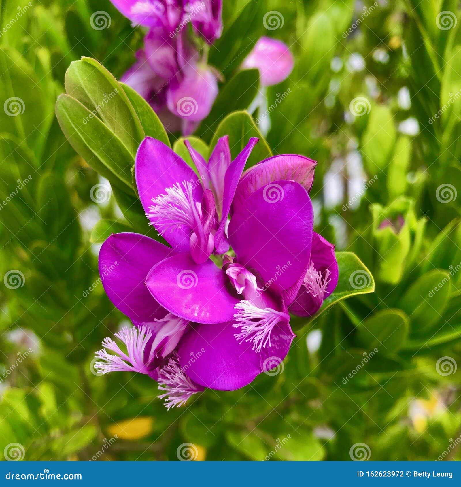 Piekne Rozowe Kwiaty Kwitna W Kalifornii Latem Zdjecie Stock Obraz Zlozonej Z Kwiat Natura 162623972