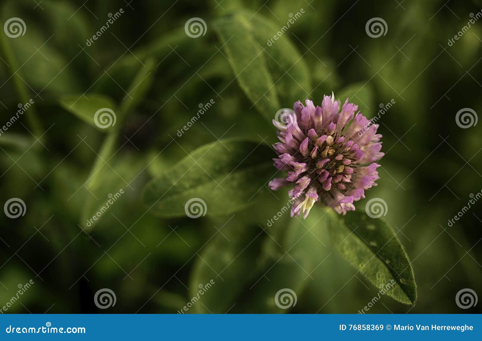 Piękne różowy kwiat