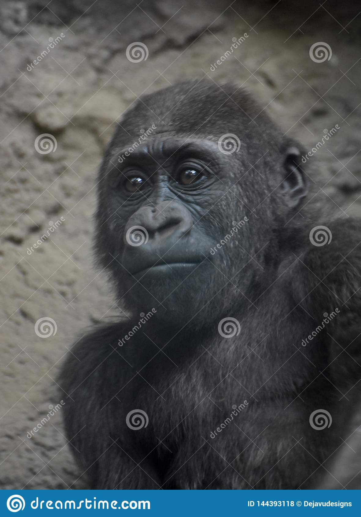 Pięknego dziecka Halny goryl w Oszałamiająco w górę