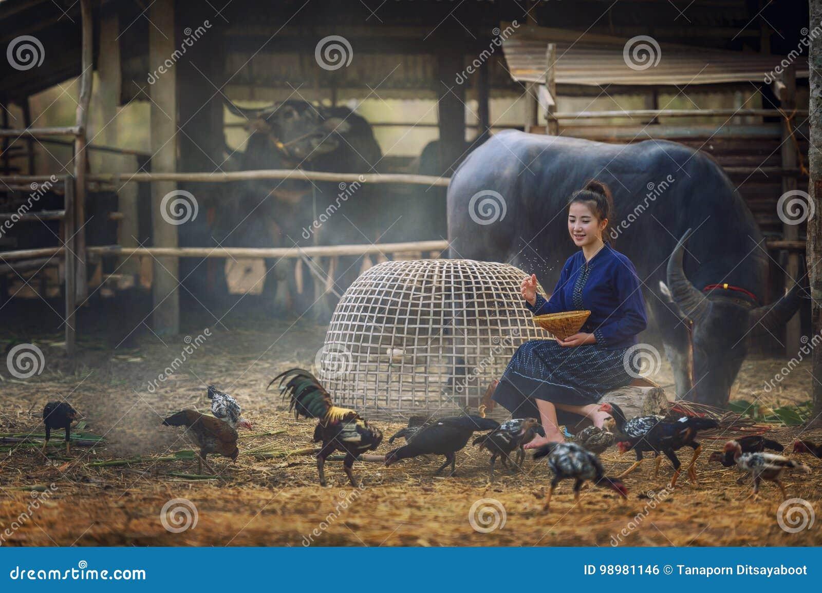 Pięknej Laos kobiety żywieniowi kurczaki w wsi na rolnym tle