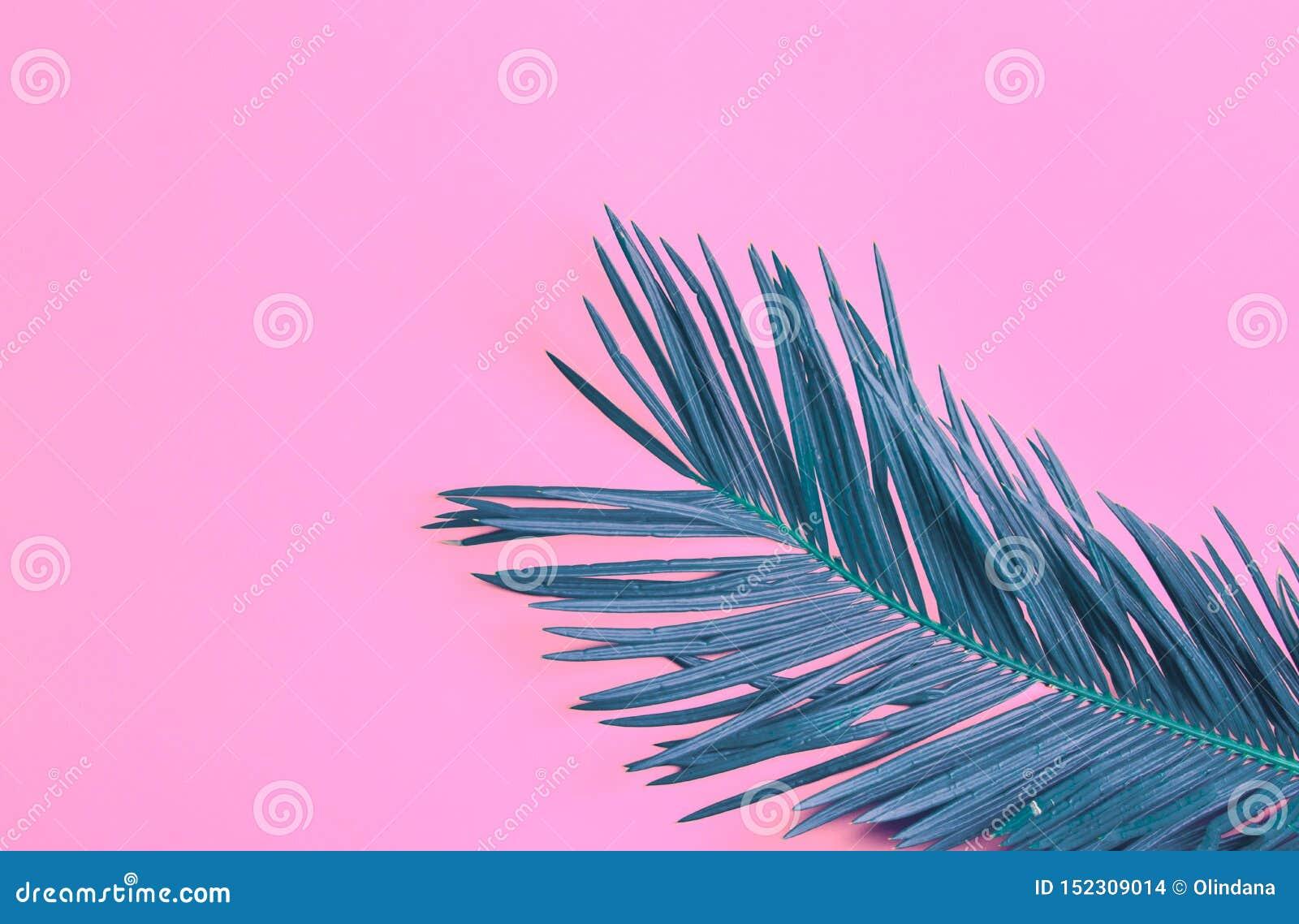 Pięknej piórkowatej cyraneczki palmowy liść na wibrującym neonowym różowym tle Lata tropikalny kreatywnie poj?cie Miastowi dżungl