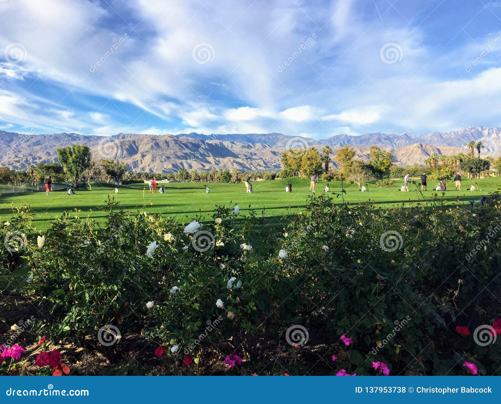 Pięknej trawy napędowy pasmo w palm springs, Kalifornia, Stany Zjednoczone Pasmo jest trawą z kwiatami w przedpolu