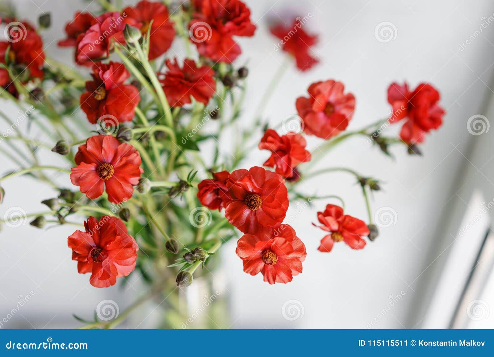 Piękni jaskiery Bush kwitną w wazie na stole Bukiet czerwony kwiat Dekoracja dom Tapeta i