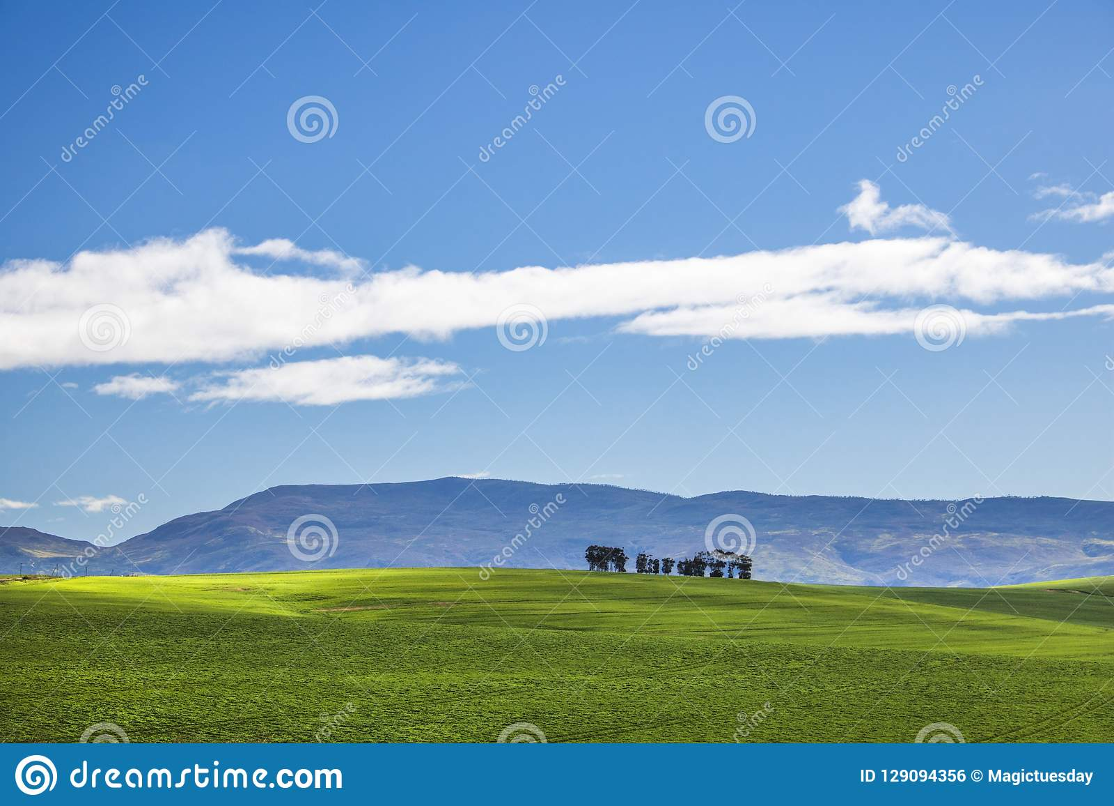 Piękni kołysanie się zieleni pola i drzewna linia z górami w odległości z niebieskim niebem i cluds Caledon, Zachodni przylądek,