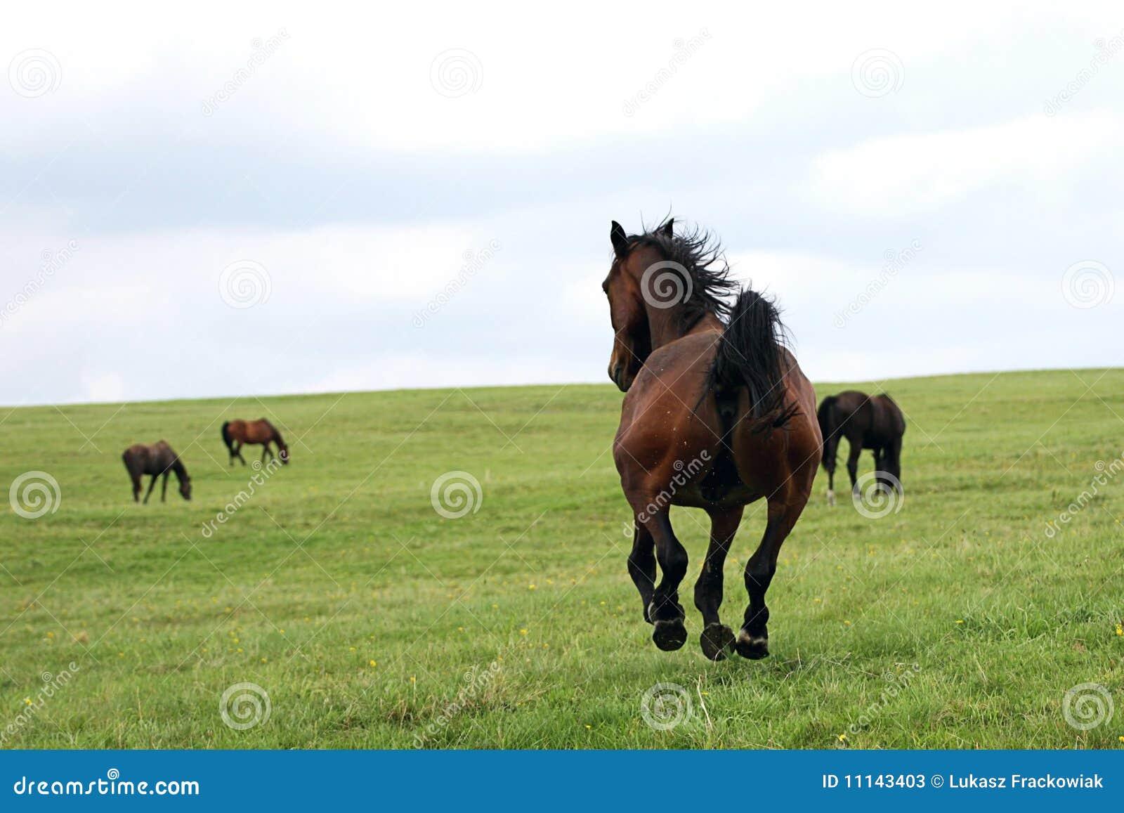 Piękni konie